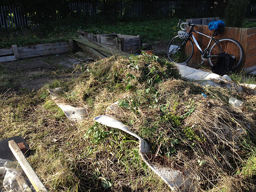 Pile of cuttings from the allotment and carpet covering
