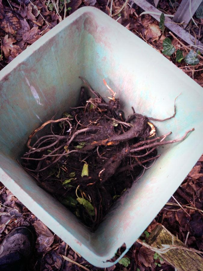 dock-root